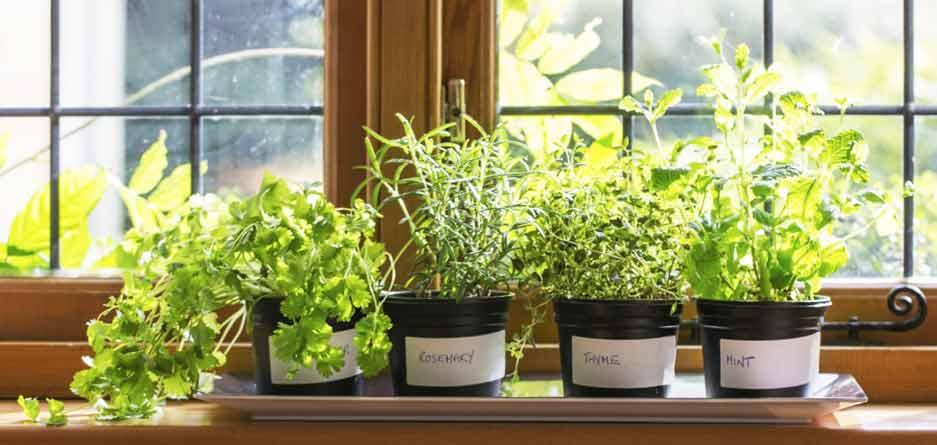با کاشتن این 5 گیاه سلامتی را به خانه بیاورید