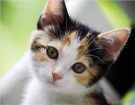 خطرات گربه برای زنان باردار