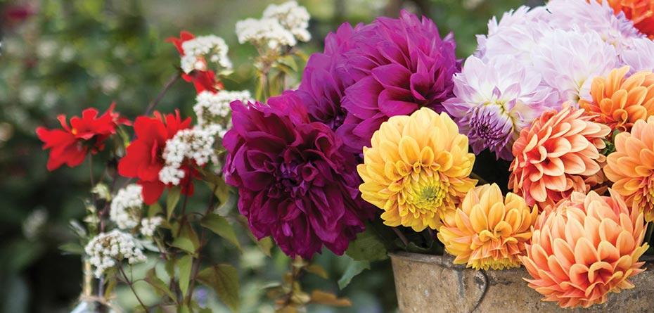 گل های پاییزی در باغچه بکارید