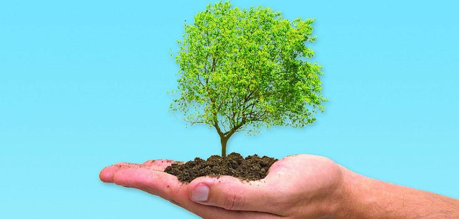 روز درختکاری، پیشنهادهای پدر بلوط ایران