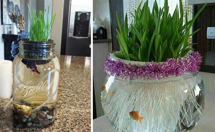 بر روی تنگ ماهی سبزه برویانید