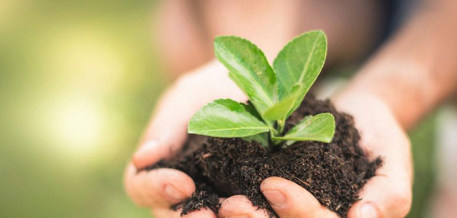 کمپین کاشت نهال، رایگان درخت بکارید