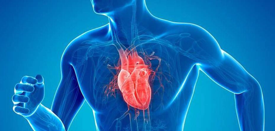 محققان رویان قلب تپنده تولید کردند!