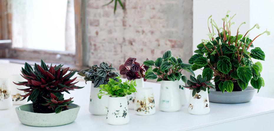 نگهداری از گیاهان آپارتمانی نور دوست