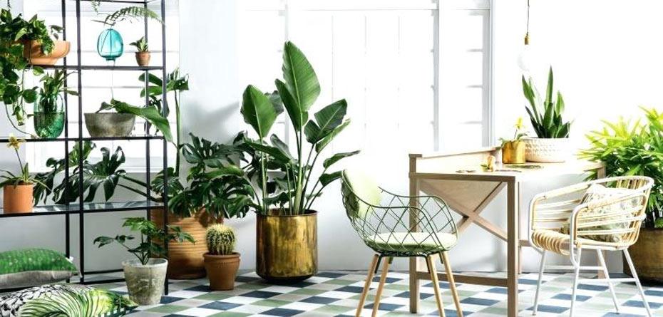 دکوراسیون با گیاهان آپارتمانی، پیشنهادهای جذاب